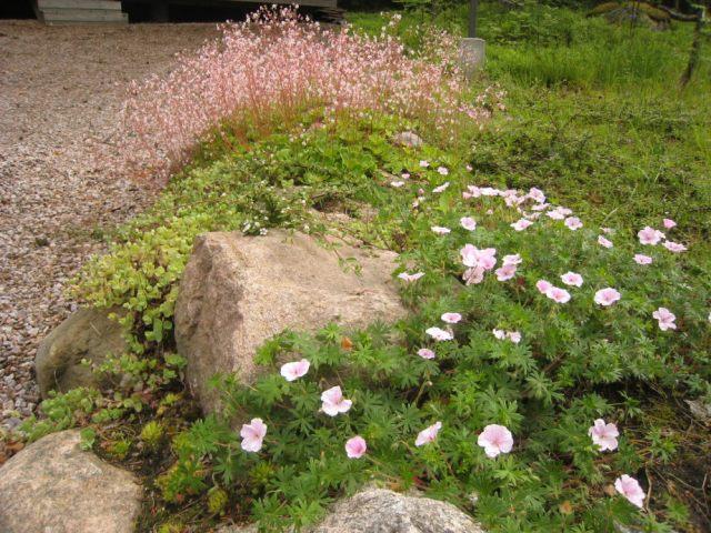 Posliinirikko kukassa