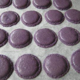 Violetit lässähtäneet